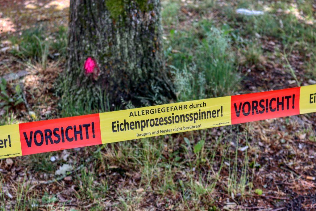 Das Absperrband warnt vor dem Eichenprozessionsspinner. Das Gebiet sollte nicht betreten werden.